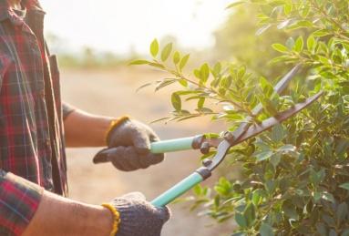 cuidar tu jardín en primavera
